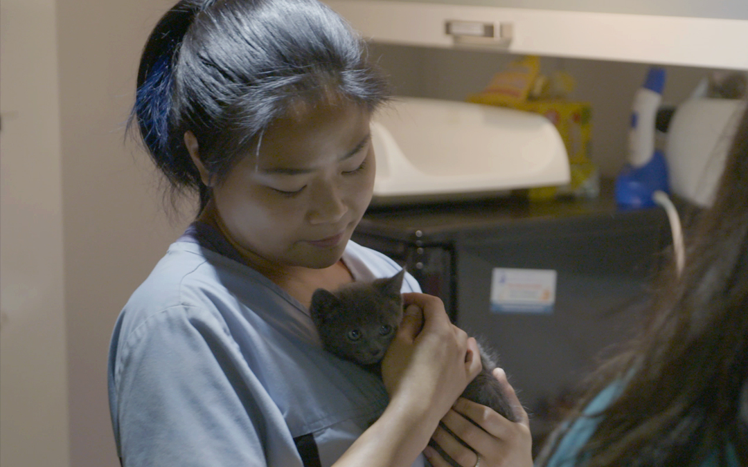 How This Kitten Rescue Volunteer Found Her Passion